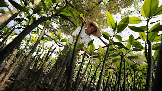 Philippines 'breaks world tree-planting record'