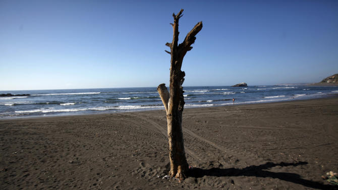 In this photo taken Nov. 29, 2012, a bare lone tree is part of the landscape on the shores of La Boca beach in Navidad,Chile, An 8.8-magnitude earthquake and the tsunami it triggered on Chile's coasts in 2010, killed 551 people, destroyed 220,000 homes and washed away docks, riverfronts and seaside resorts. Most Navidenos were left without power and water for a month; many lost their homes. (AP Photo/Luis Hidalgo)