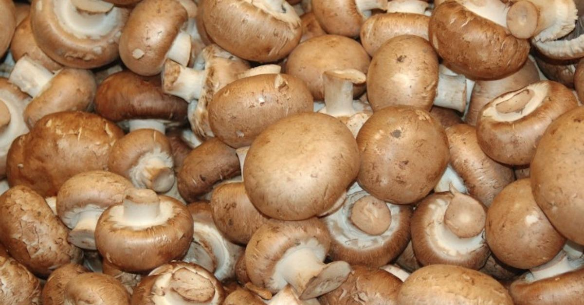 15 Edible Mushrooms And Their Health Benefits