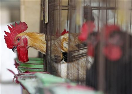 Chickens sit inside cages in a market in New Taipei City