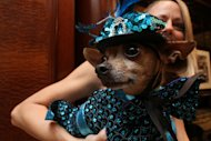 Dressed for the occasion, Eli, a Chihuahua, is held by his owner Karen Biehl of New York, as they wait for the start of the most expensive wedding for pets Thursday July 12, 2012 in New York. The black-tie fundraiser , where two dogs were &quot;married&quot;, was held to benefit the Humane Society of New York. (AP Photo/Tina Fineberg)