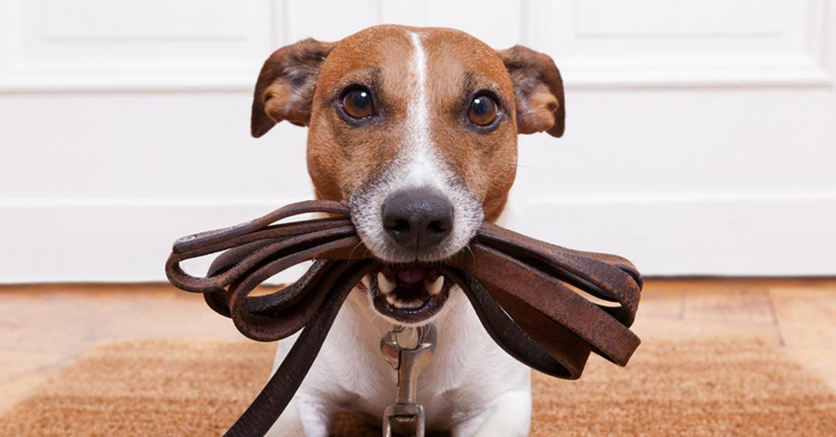 Lazy? Don't Buy One of These Dog Breeds