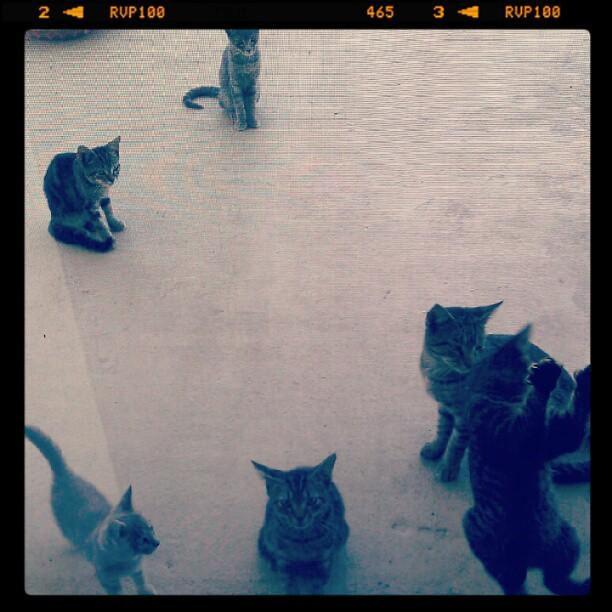 8. Dinner Time For Kitties!