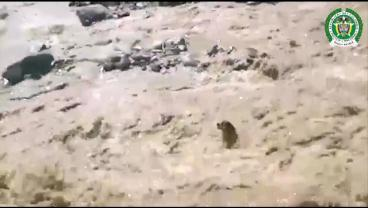 Dog Saved In Amazing River Rescue