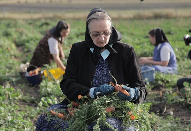 "This undated image released by National Geographic Channels shows Hutterite Judy Hofer picking carrots from the garden in King Colony, Mont. ""Meet the Hutterites,"" a National Geographic documentary series about a small religious colony in rural Montana. Leaders of a Hutterite colony are demanding to meet with the head of the National Geographic Society after they say a reality show on the National Geographic Channel misrepresented life on the Montana colony and harmed their members. The King Ranch Colony says residents were pressured and coerced to fabricate scenes to boost ratings, and they are want a public apology and a pledge that the 10 episodes never air again. (AP Photo/National Georgraphic, Ben Shank)"