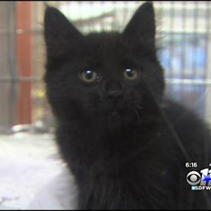 Animal Shelter At Code Red Full; Specials Offered