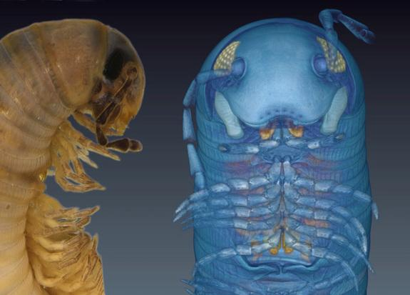 What's Blue with Legs All Over? New 3D Avatar Millipede