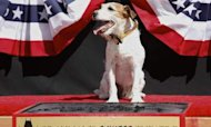 Star Dog Uggie&#39;s Retirement Is Set In Stone