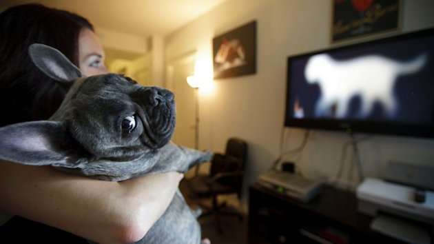 DirecTV Launching New Channel for Dogs Only (ABC News)