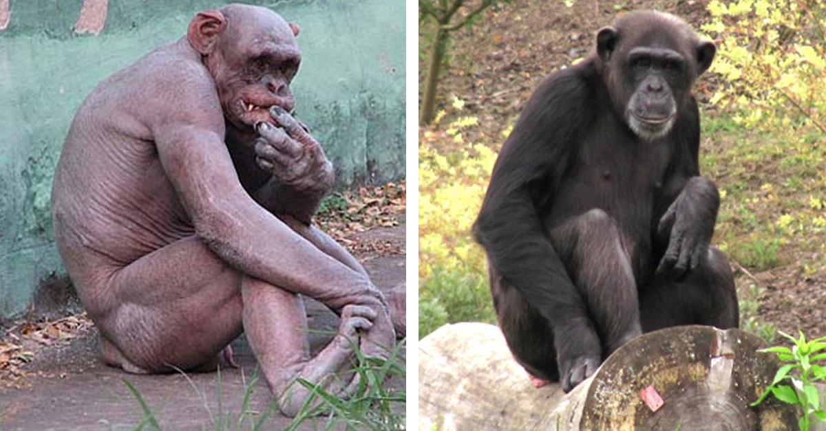 These Animals Look Totally Different Without Hair