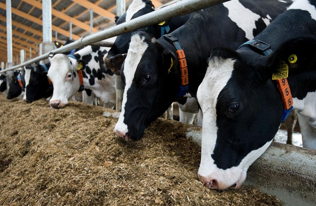 German farmers not cowed by end of EU milk quotas