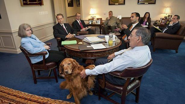 Leon Panetta's Dog Is Better at Keeping the CIA's Secrets Than David Petraeus