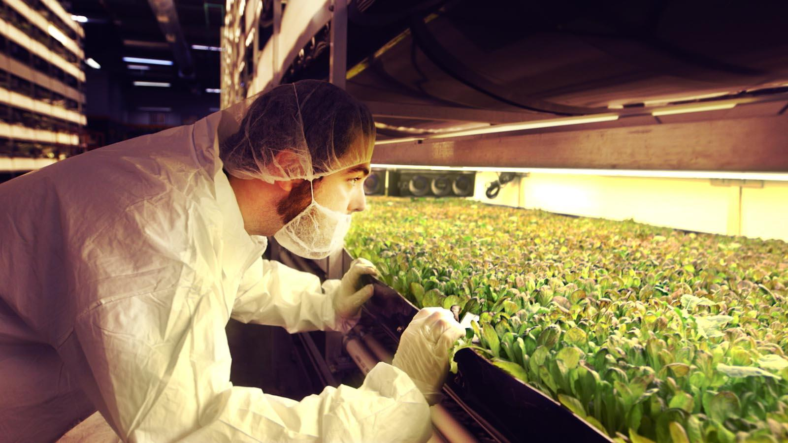 Growing Up: Vertical Farms Evolve to End Hunger
