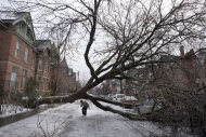 A pedestrian walks under a tree blocking Wellesley Street East following an ice storm in Toronto on Monday, Dec. 23, 2013. THE CANADIAN PRESS/Matthew Sherwood