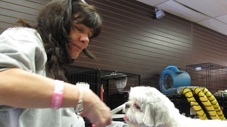 In this photo taken on Wednesday, April 17, 2013, Elizabeth Patricola grooms Daphne, a small Shih Tzu, in her shop in Miller Place, N.Y. Patrcola, a breast cancer survivor, says she was among many who donated to a woman who prosecutors said was running a cancer charity scam to feed a heroin addiction. (AP Photo/Frank Eltman)
