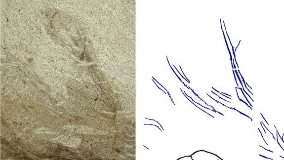 Dinosaurs Looking for Love Grew Alluring Feathers