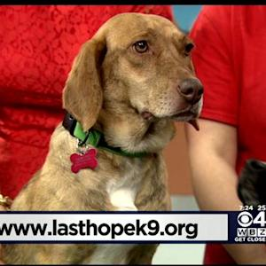 Pet Parade: Last Hope K9 Rescue In Boston
