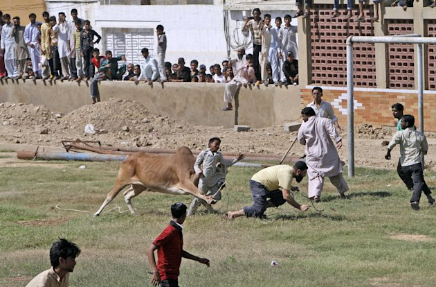 A bull attacks a boy after running away from Pakistani butchers trying to slaughter it, on the first day of the Muslim holiday of Eid al-Adha, or &quot;Feast of Sacrifice&quot;, in Karachi, Pakistan, Saturday, Oct. 27, 2012. The boy was slightly injured according to the photographer. (AP Photo/Shakil Adil)