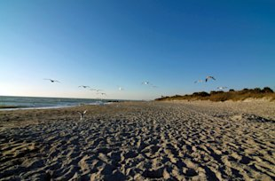 Venice Beach near Sarasota, Florida (Photo: Sarasota Convention and Visitors Bureau)