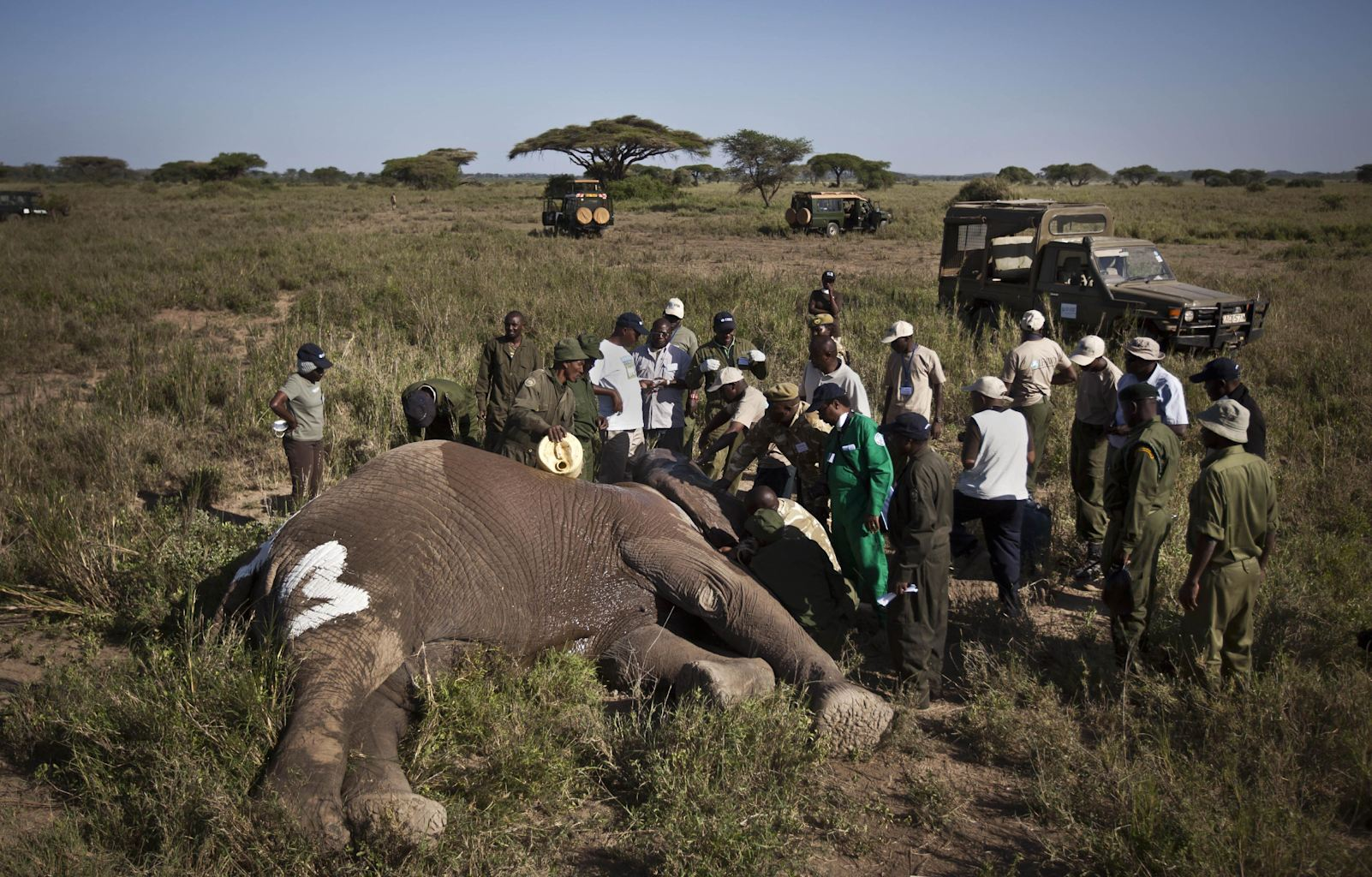 , Feb. 19, 2013 file photo, a team from the Kenya Wildlife Service ...