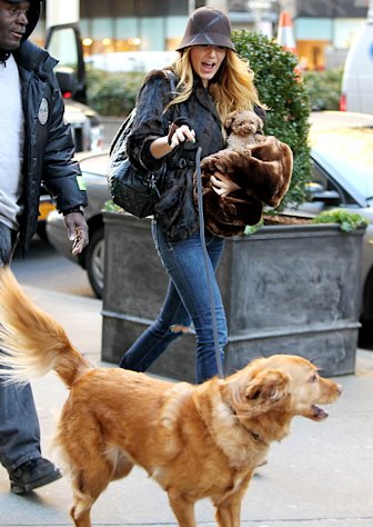 Blake Lively Dotes on Ryan Reynolds' Dog Baxter