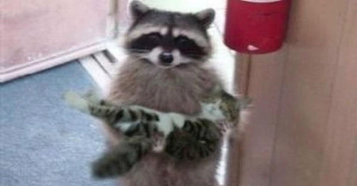 17 Adorable Animals Holding Other Adorable Animals