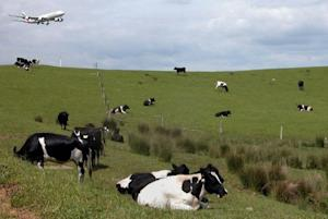 China's Shanghai Pengxin Group is to buy the 16-property Crafar Farms group in New Zealand