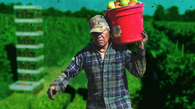 Would America's Farms Collapse Without Immigrants? - Testtube Daily Show-AR