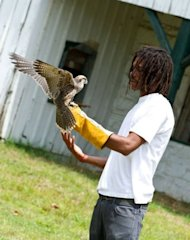 Dallas Coleman, 20, goes through training with James, a Lanner Falcon at the Wings Over America bird sanctuary in Laurel, Maryland on June 14, 2012. Wings Over America pairs adjudicated youth with injured birds of prey in a response to a growing awareness of the need for young people to reconnect to nature, and to have such opportunities as part of the rehabilitation process