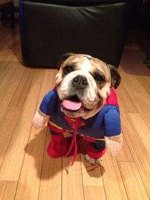 "Milk-Bone® Teams Up With Brit + Co. for a Halloween ""Trick or Treat"" Pet Costume Contest"