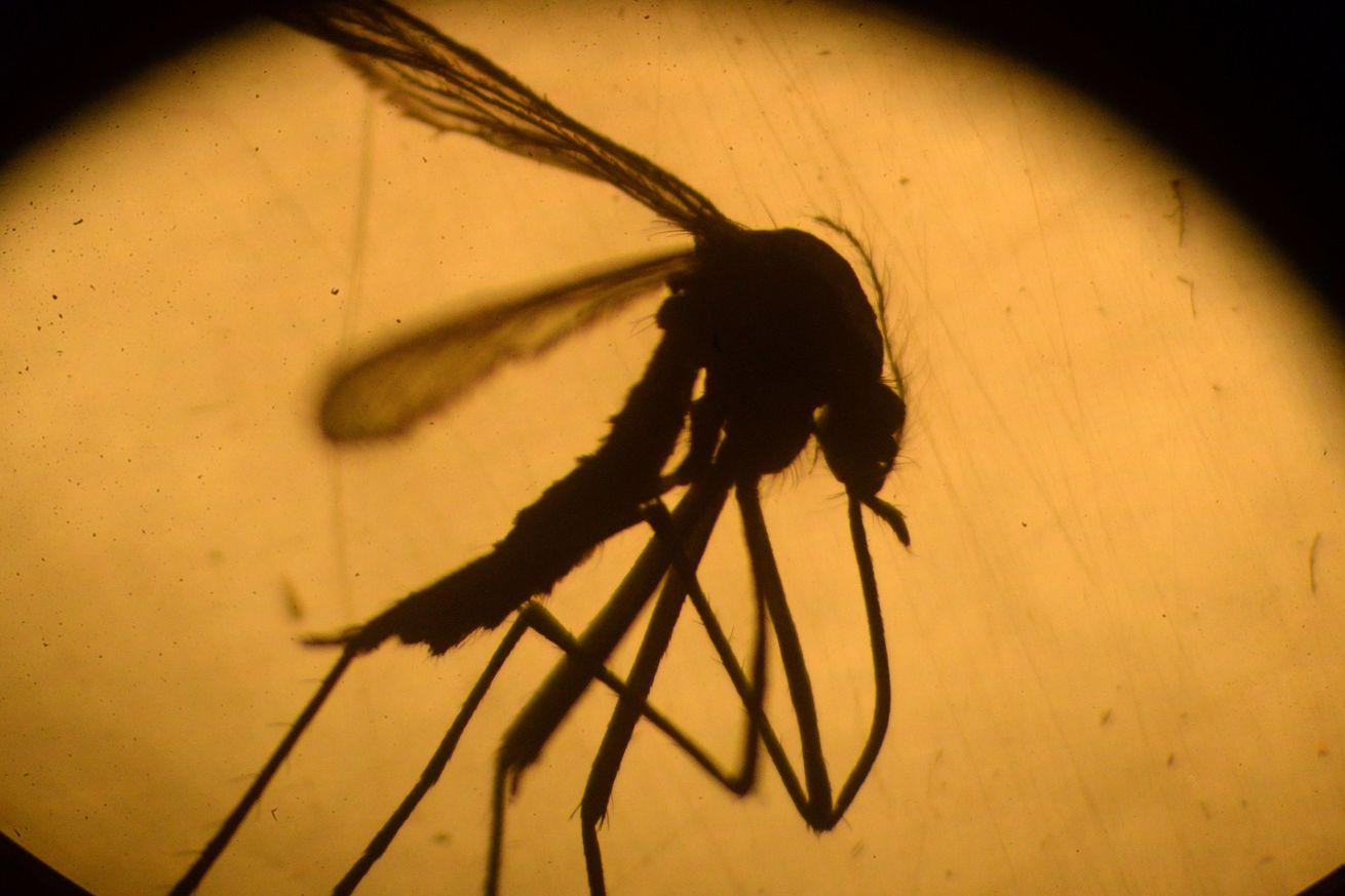 The unsexy truth about how to kill off mosquitoes and stop the Zika virus