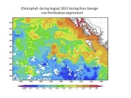 Chlorophyll levels off the west coast of Canada in August 2012, about a month after a controversial ocean-fertilization project.