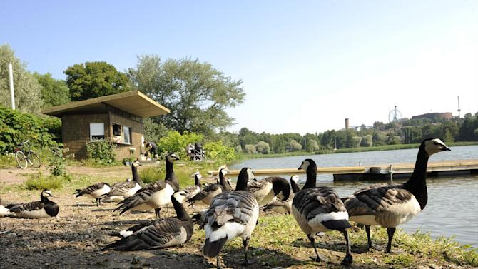 In this July 8, 2010 photo, Barnacle geese gather by a small cafe by the Toolonlahti Bay in Helsinki, Finland. The city has a timeless maritime character, with its location on the Baltic Sea offering views of the bay filled with boats and dozens of tiny islands. (AP Photo/Lehtikuva, Martti Kainulainen) FINLAND OUT