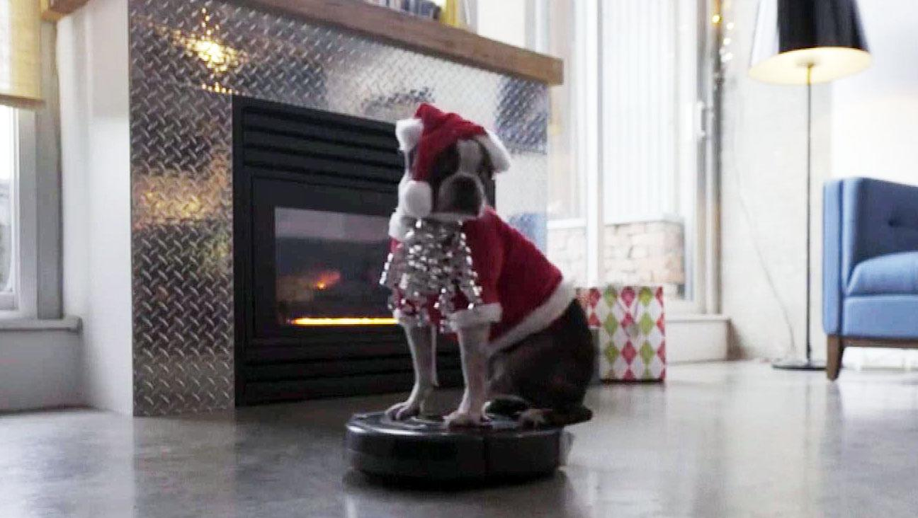Santa dog hitches a holiday ride