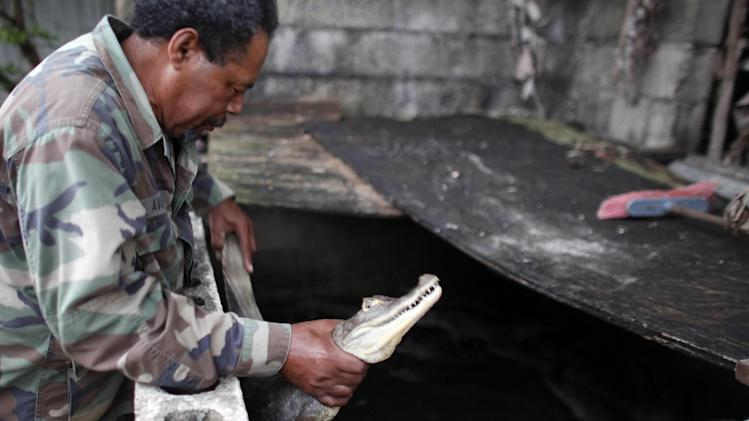 In this Dec. 5, 2012 photo, Daniel Montanez, 58, holds a caiman in Vega Baja, Puerto Rico. A fisherman by trade, Montanez said the caimans first caught his eye during night fishing expeditions. Now, neighbors call him if they have a problem with the reptiles. (AP Photo/Ricardo Arduengo)
