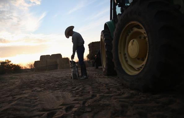 Rancher Gary Wollert pauses before heading out for work on August 23, 2012 near Eads, on the plains of eastern Colorado. The nation's severe drought has been especially hard on cattlemen and exacerbated when Congress recessed for 5 weeks withough passing disaster relief legislation. Most of the high plains areas of eastern Colorado and virtually all of Nebraska and Kansas are still in extreme or exceptional drought, despite recent lower temperatures, according to the University of Nebraska's Drought Monitor. The record-breaking drought, which has affected more than half of the continental United States, is expected to drive up food prices by 2013 due to lower crop harvests and the adverse effect on the nation's cattle industry. (Photo by John Moore/Getty Images)