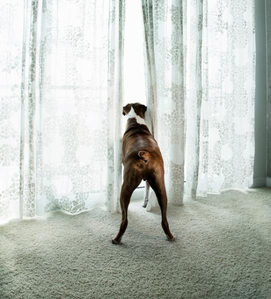Do You Wonder if Your Dog is Lonely? Here's the Answer