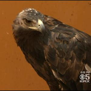 Mites Targeting California's Golden Eagles