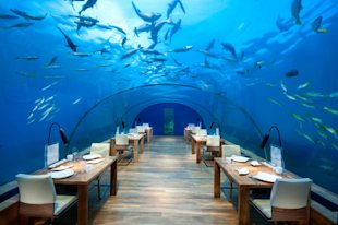 At the world's quirkiest restaurants, anything is possible.