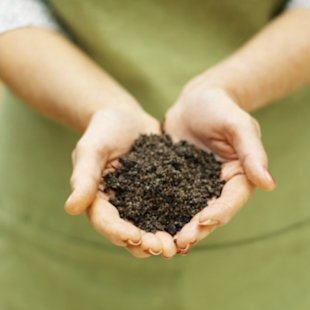 A bacteria found in dirt may act like a natural antidepressant.