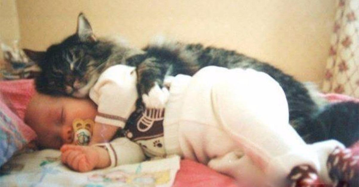 Want To See 20 Cute Cuddling Animals?