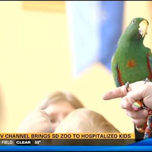New TV channel brings San Diego Zoo to hospitalized kids