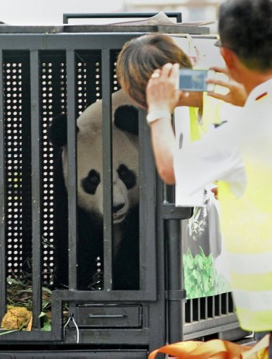 Singapore hopes the pandas will have babies during their stay in the city-state