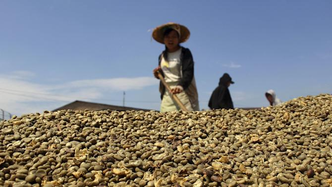 File photo of a worker drying coffee beans for export to the United States in Medan