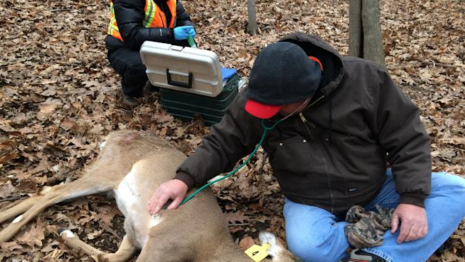 In this March 25, 2014 photo provided by the Humane Society of the United States, Humane Society workers Rick Naugle foreground, takes a deer's vital signs as Kayla Gram prepares to inject a tagged and tranquilized doe with a contraceptive as part of a program to control the deer population in Hastings-on-Hudson, N.Y. Organizers say harsh weather, red tape and the unpredictability of the animals all interfered with the program and they only managed to inject a contraceptive into eight does last month. An estimated 120 deer have overrun the two-square mile village, which has resisted any lethal method of culling the herd. (AP Photo/Humane Society of the United States, Yvonne Forman)