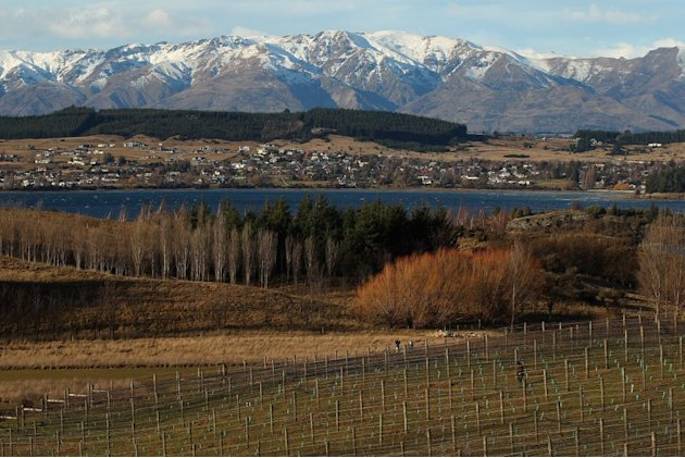 Otago New Zealand wine re …