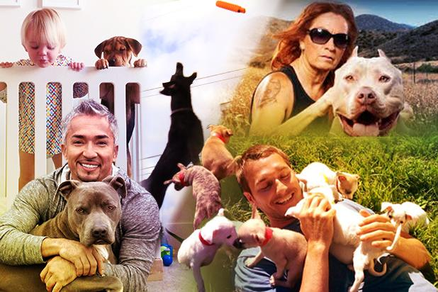Hollywood's Dog TV Show Explosion: Inside the $60 Billion Canine Industry
