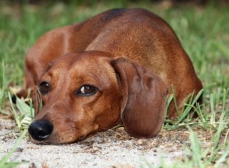 5 signs you're too close to your dog