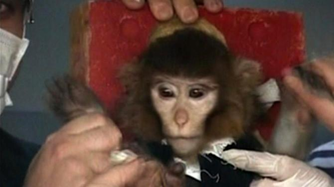Iran says it successfully sent a monkey into space