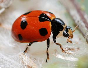 72,000 Ladybugs Released in Mall of America